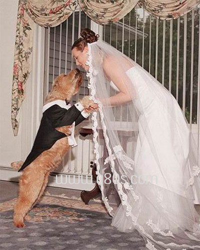 wanita nikahi anjing 1